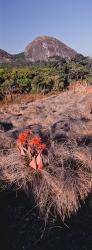 084A_LZmMut_0507-01.9V Aloe, Miombo & Inselberg