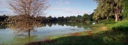 202_LZmE_427 Chipela Chandombo Lagoon, March
