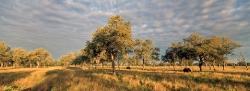 EXHIBITION:  Luangwa Wild