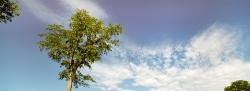 222_LZmE_422 Mopane & Sky